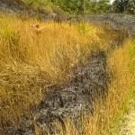 kebakaran lahan - peruz