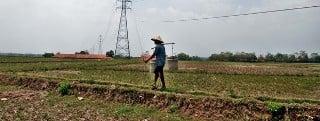 pertanian jawa barat