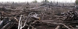 Forest Fire - CIFOR Creative Commons