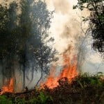 Forest fires - CIFOR
