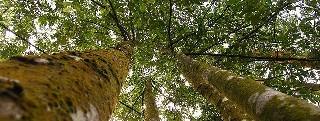 Hutan - Emran Kassim