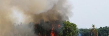 kebakaran lahan kalteng_maturidi