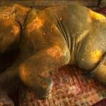 perawatan gajah sumatera2