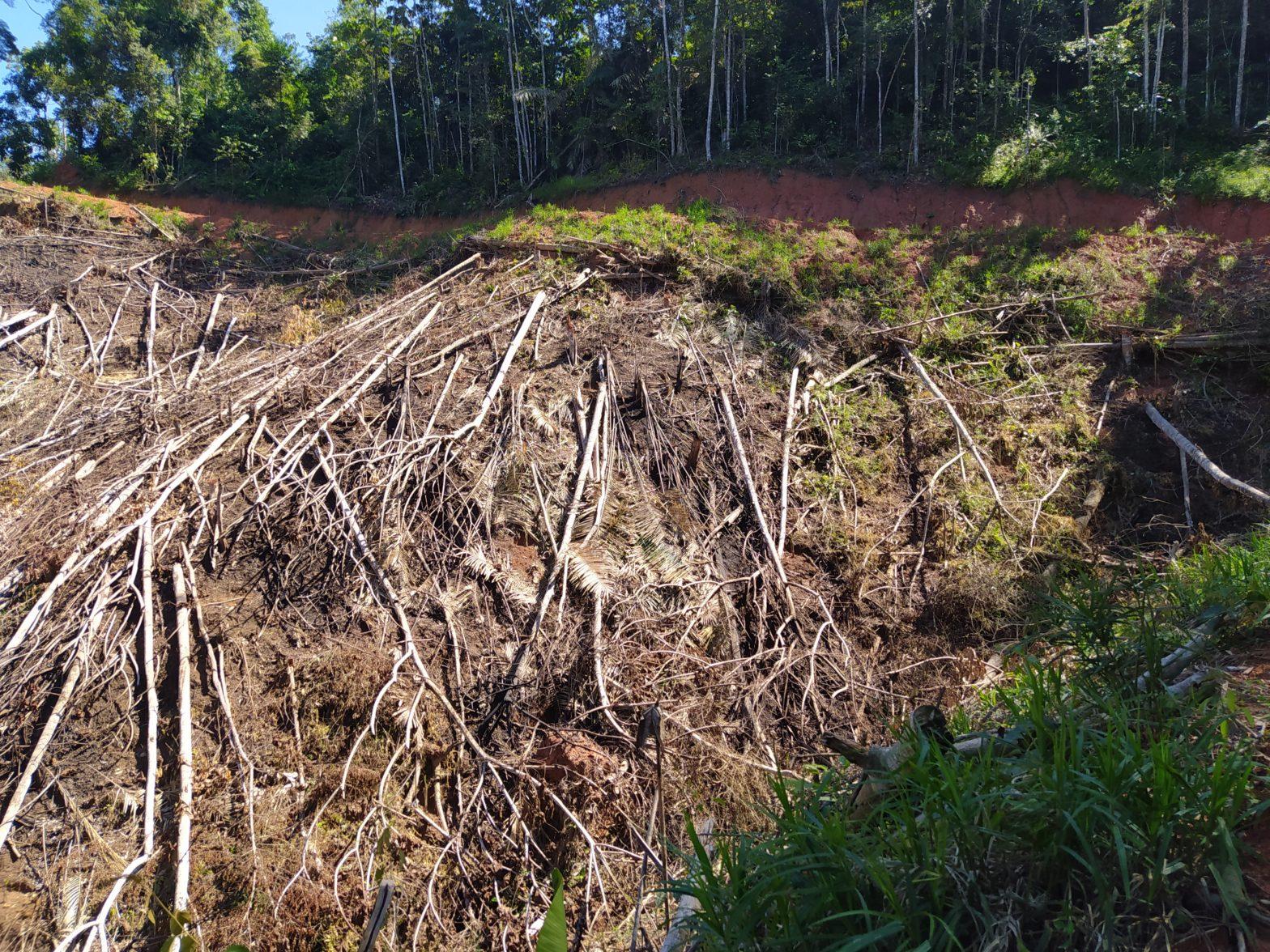 Hutan Desa Pemandang