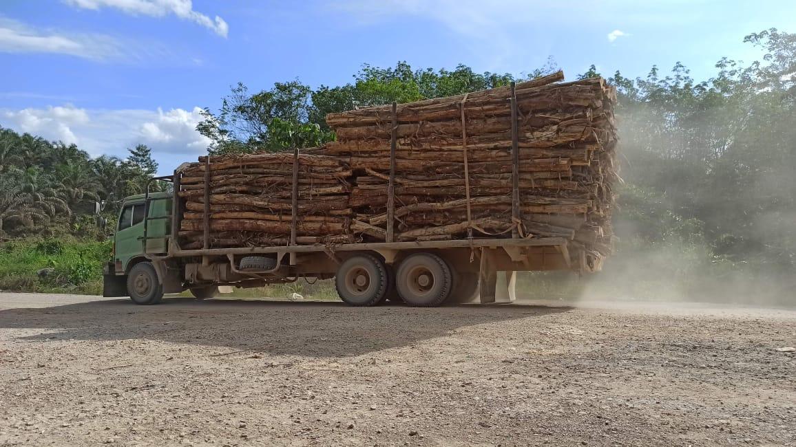 Truk PT WKS membawa kayu akasia mangium.