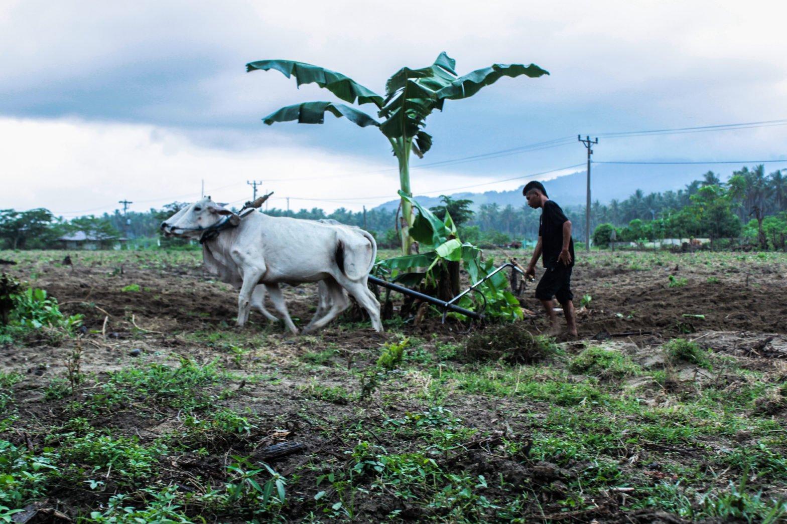 Petani di Desa Bangga